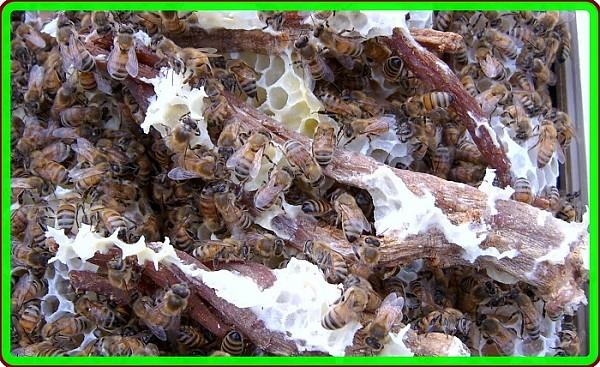 꿀벌효소숙성홍삼